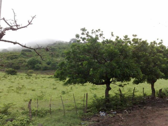 Around Estelimar