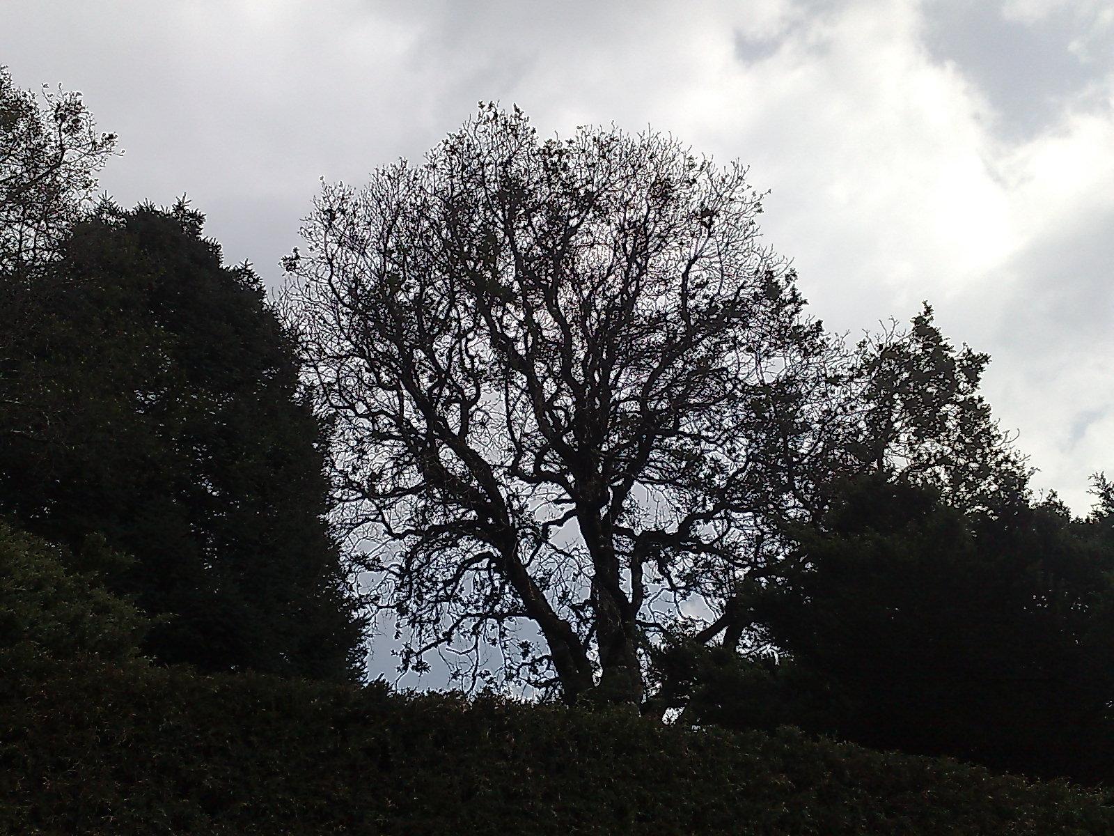 Very fractaly tree