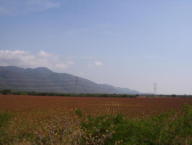 Beautiful sorghum fields in Oaxaca