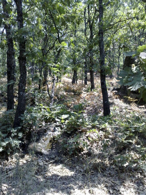 Valle del Jerte, hiking towards Garganta de los Infiernos