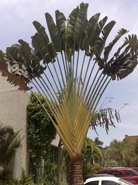 Beautiful tropical vegetation