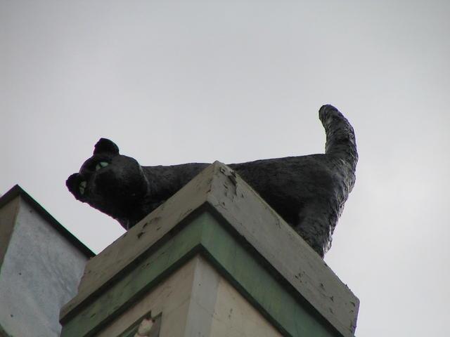 Cat-lover building in Talinn - Detail