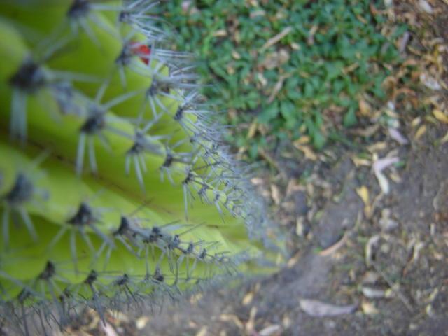 Vegetation in the UTM campus