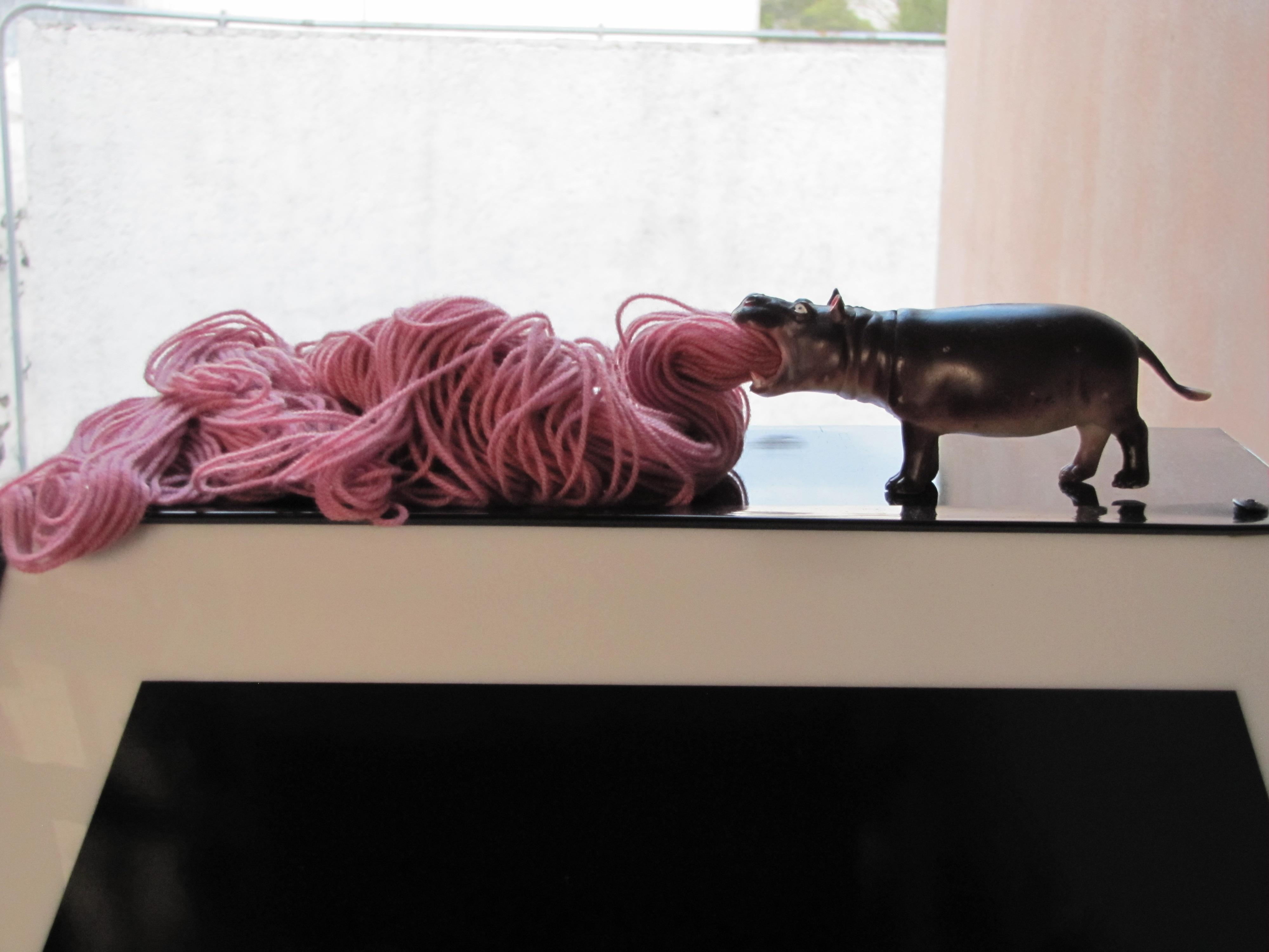Hippopotamus barf