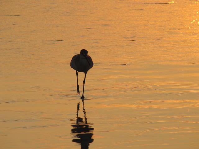 Sunset, bird, sea...