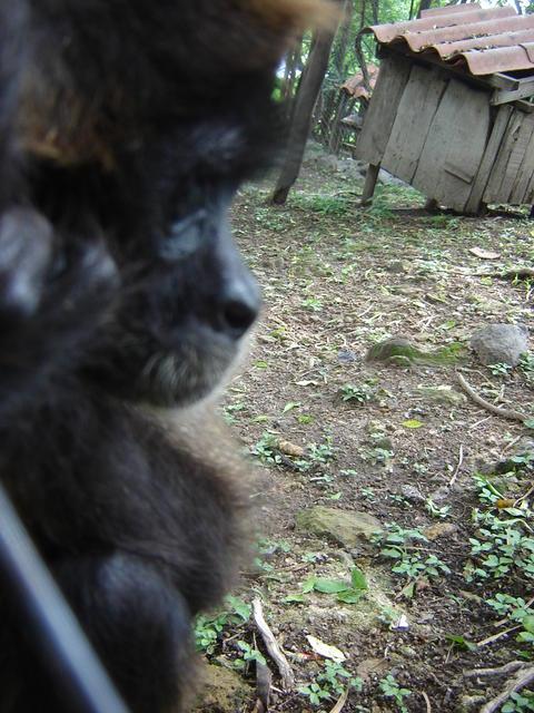 Two caged monkeys in Estelimar