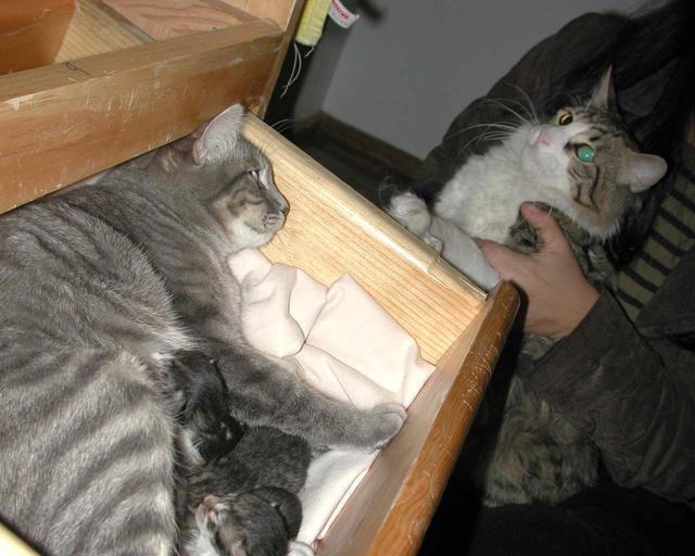 My kittens still as newborns